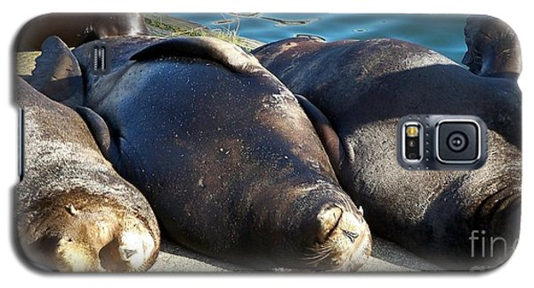Sunbathing Sea Lions Galaxy S5 Case by Chalet Roome-Rigdon