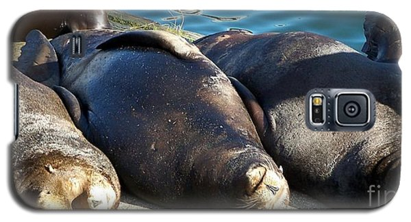 Galaxy S5 Case featuring the photograph Sunbathing Sea Lions by Chalet Roome-Rigdon