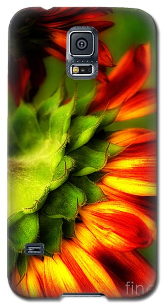 Galaxy S5 Case featuring the photograph Sunflower  by Alana Ranney