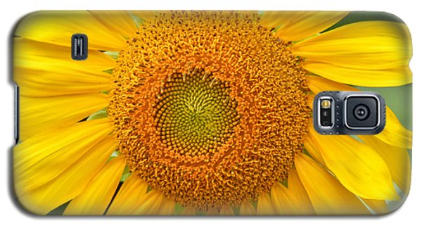 Sunflower Days Galaxy S5 Case