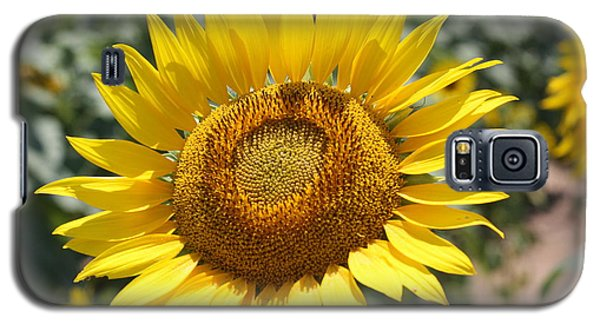 Galaxy S5 Case featuring the photograph Sunflower by Donna  Smith