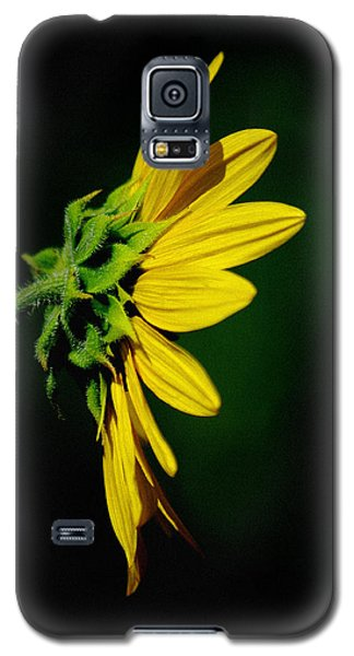 Galaxy S5 Case featuring the photograph Sunflower In Profile by Vicki Pelham