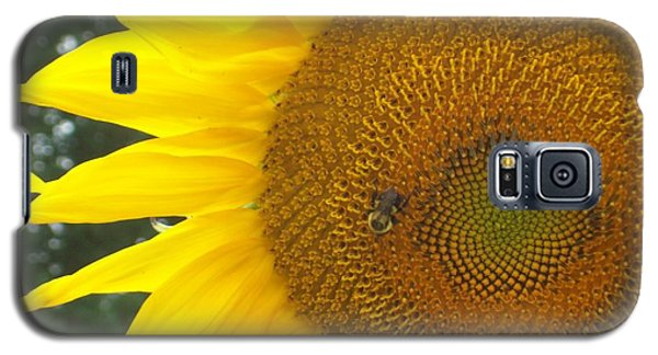 Galaxy S5 Case featuring the photograph Sunflower by Lou Ann Bagnall