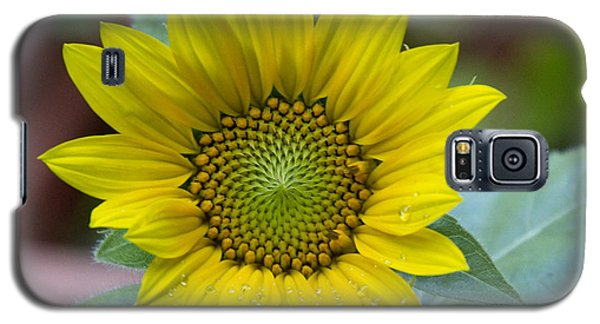 Sunflower Number 2 Galaxy S5 Case