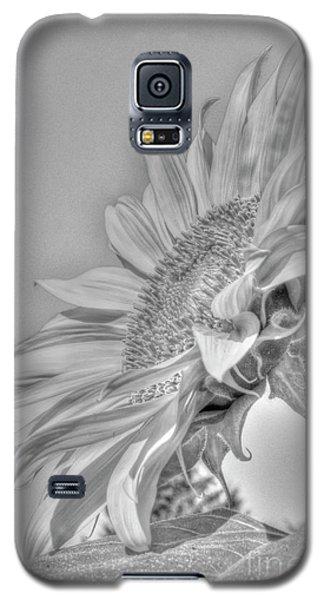 Sunflower Galaxy S5 Case by Rod Wiens