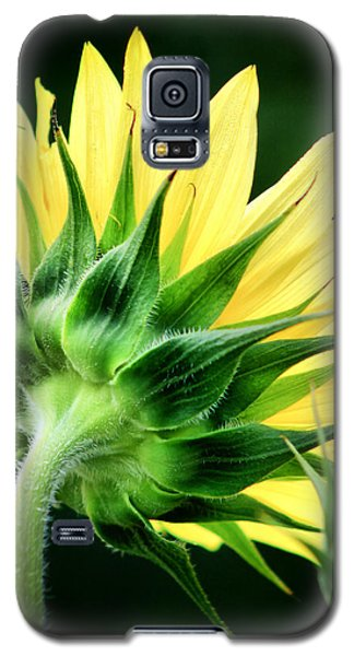 Galaxy S5 Case featuring the photograph Sunflower With Bee by Lynne Jenkins