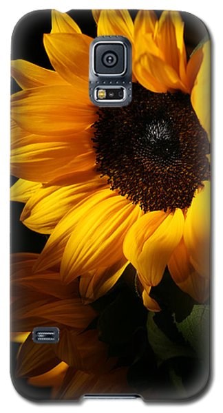 Sunflowers Galaxy S5 Case by Dorothy Cunningham