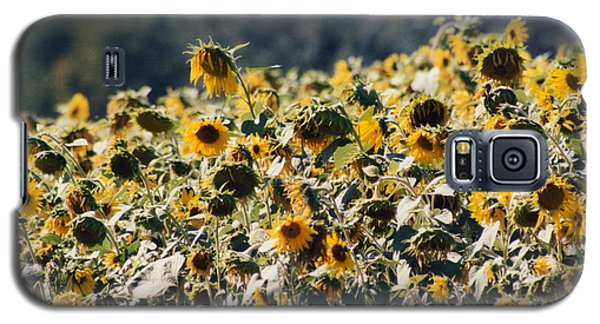 Galaxy S5 Case featuring the photograph Sunflowers by Maureen E Ritter