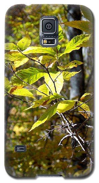 Sunlight On Leaves Galaxy S5 Case by Robin Regan