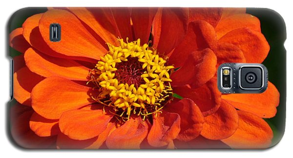 Galaxy S5 Case featuring the photograph Sunny Delight by Lingfai Leung