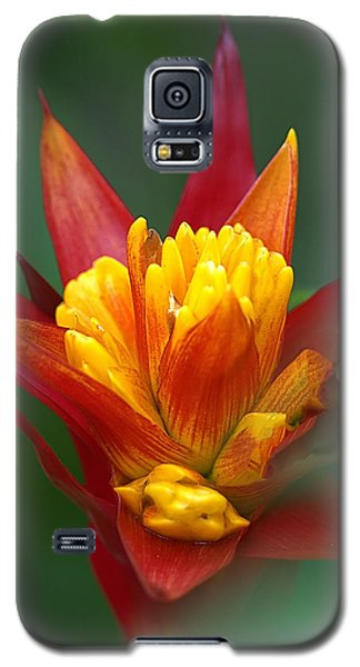 Galaxy S5 Case featuring the photograph Sunrise - Sunset by Anne Rodkin
