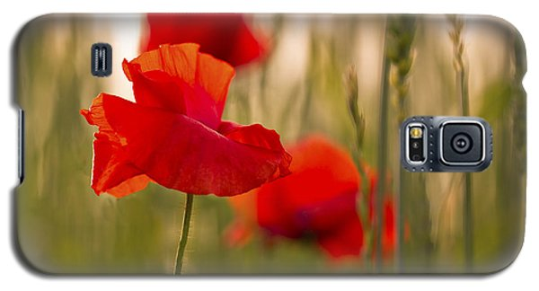 Galaxy S5 Case featuring the photograph Sunset Poppies. by Clare Bambers