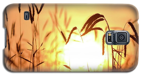 Sunset Rye IIi Galaxy S5 Case