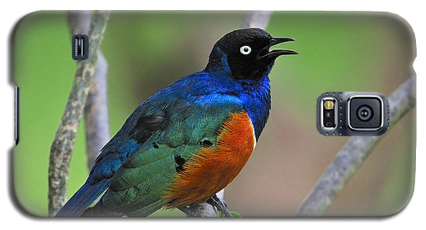 Superb Starling Galaxy S5 Case