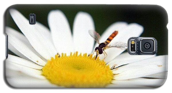 Cause Galaxy S5 Case - Sustain by Nate Doran