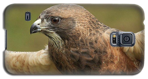Galaxy S5 Case featuring the photograph Swainson's Hawk by Doug Herr