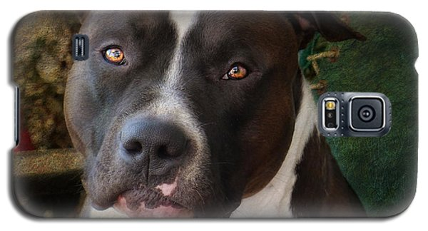 Bull Galaxy S5 Case - Sweet Little Pitty by Larry Marshall