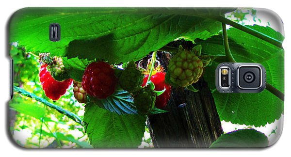 Sweet N Juicy Galaxy S5 Case