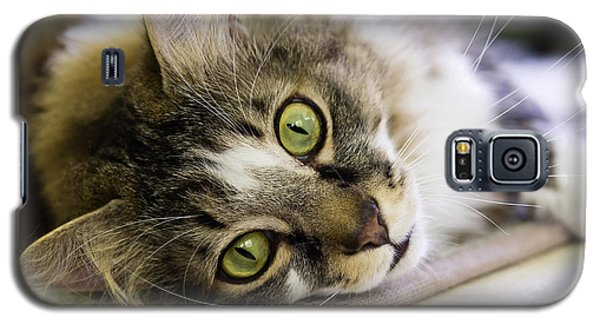 Tabby Cat Looking At Camera Galaxy S5 Case