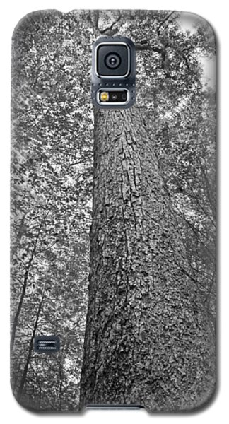 Galaxy S5 Case featuring the photograph Tall Tree With Sunshine by Susan Leggett