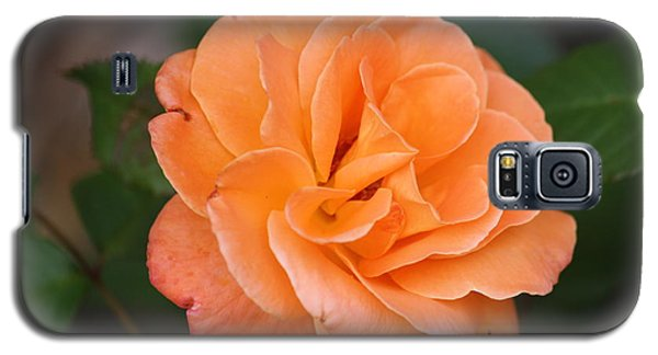 Galaxy S5 Case featuring the photograph Tangerine Rose by Donna  Smith
