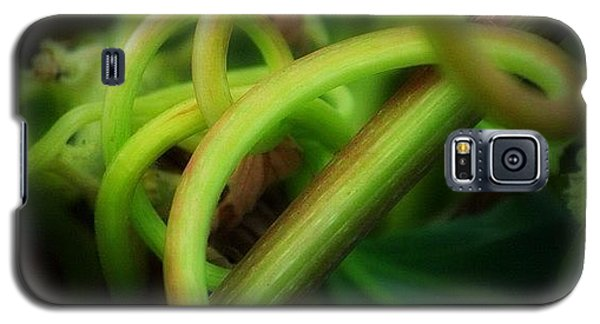 Instagramhub Galaxy S5 Case - Tangled by Matthew Blum