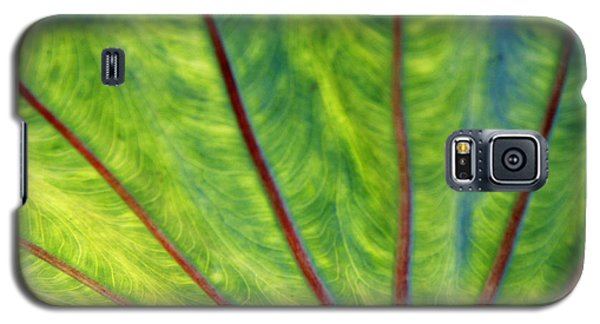 Taro 1 Galaxy S5 Case