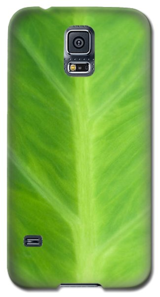 Galaxy S5 Case featuring the photograph Taro Or Elephant Ear Leaf by Denise Beverly