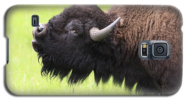 Galaxy S5 Case featuring the photograph Tatanka by Kate Purdy