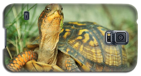 Terrapene Carolina Eastern Box Turtle Galaxy S5 Case
