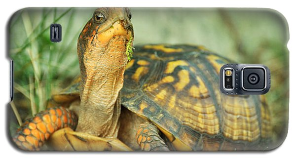 Terrapene Carolina Eastern Box Turtle Galaxy S5 Case