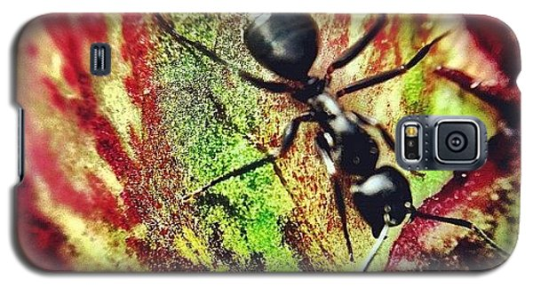 Igaddict Galaxy S5 Case - The Ants Have Arrived by Christopher Campbell