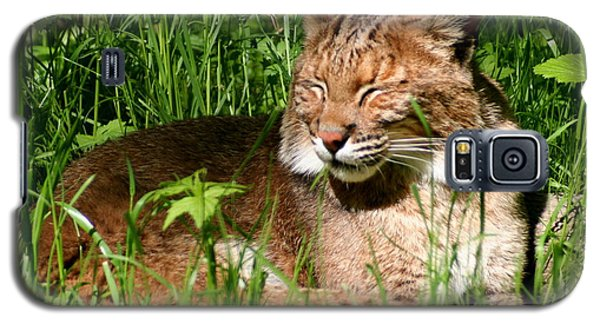 Galaxy S5 Case featuring the photograph The Bobcat's Afternoon Nap by Laurel Talabere