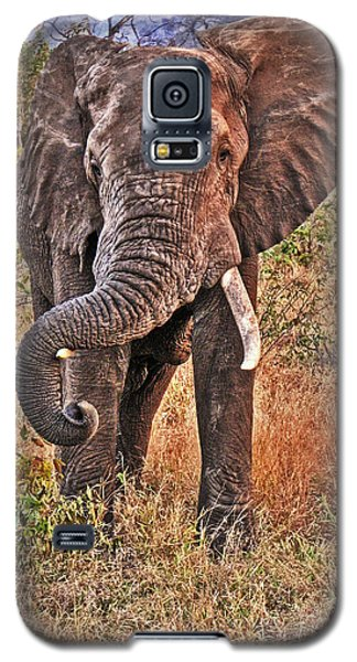 Galaxy S5 Case featuring the photograph The Bull by William Fields