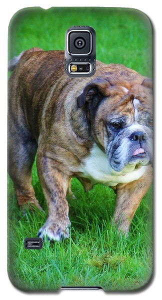 Galaxy S5 Case featuring the photograph The Bulldog Shuffle by Jeanette C Landstrom