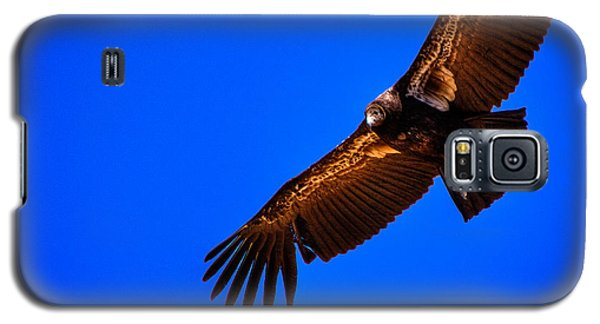 The California Condor Galaxy S5 Case