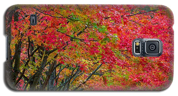 The Color Of Fall Galaxy S5 Case by Ken Stanback