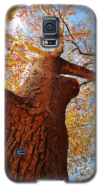 Galaxy S5 Case featuring the photograph The Deer  Autumn Leaves Tree by Peggy Franz