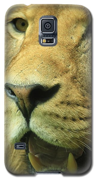 The Face Of God Galaxy S5 Case by Laddie Halupa
