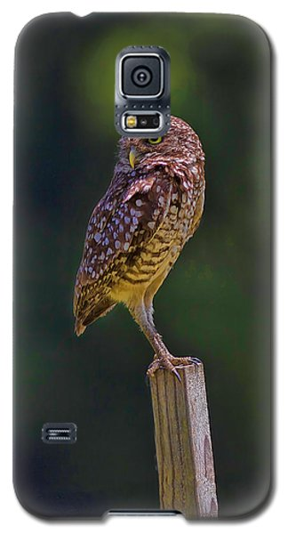 Galaxy S5 Case featuring the photograph The Guardian by Anne Rodkin