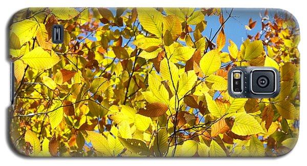 The Joy Of Autumn Galaxy S5 Case by Robin Regan