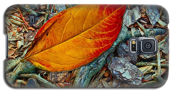The Last Leaf Galaxy S5 Case by Barbara Middleton