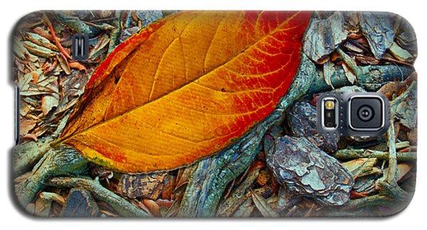 The Last Leaf Galaxy S5 Case by Barbara Middleton