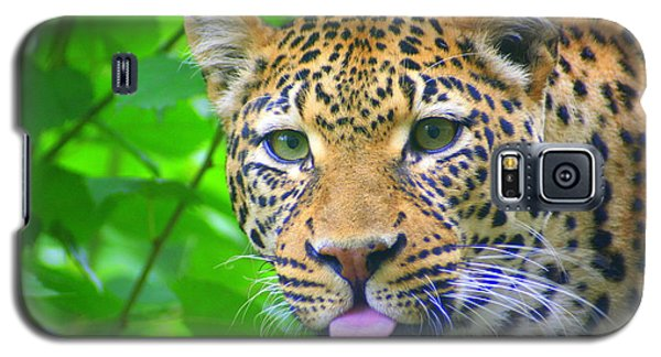 Galaxy S5 Case featuring the photograph The Leopard's Tongue by Laurel Talabere