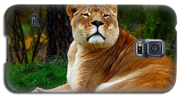 The Lioness Galaxy S5 Case
