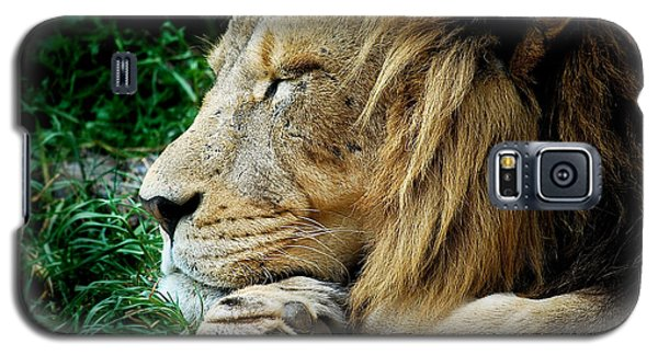 The Lions Sleeps Galaxy S5 Case