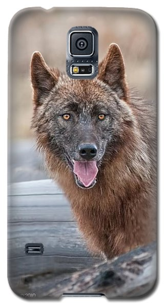 The Lone Wolf Galaxy S5 Case by CR  Courson