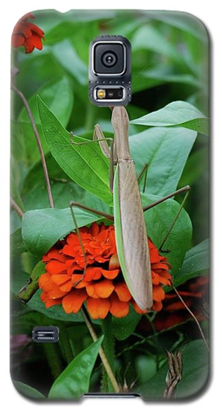 Galaxy S5 Case featuring the photograph The Patience Of A Mantis by Thomas Woolworth
