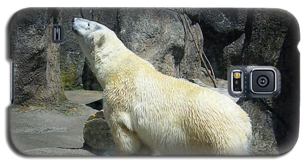 Galaxy S5 Case featuring the photograph The Polar Pose by Wendy McKennon