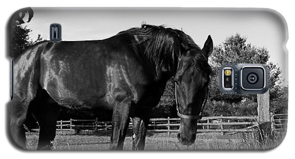 Galaxy S5 Case featuring the photograph The Stallion by Davandra Cribbie